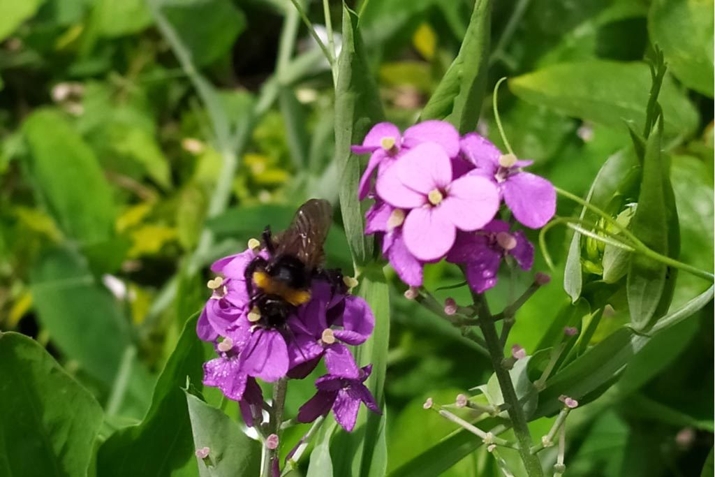 Introduction to Churchyard Bees - St Clements (credit, Norwich Historic Churches Trust)