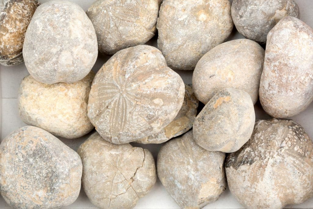 Nature's Nautical Fossils - Hidden by History (credit, Lowestoft Museum)