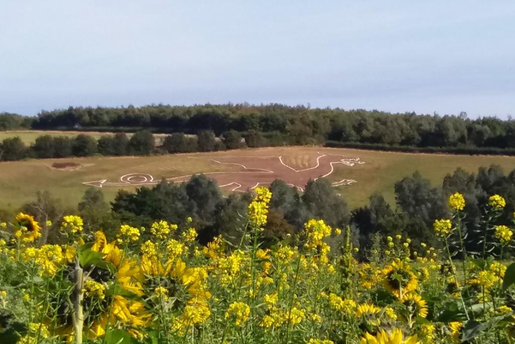 view of Bures Dragon with sunflowers