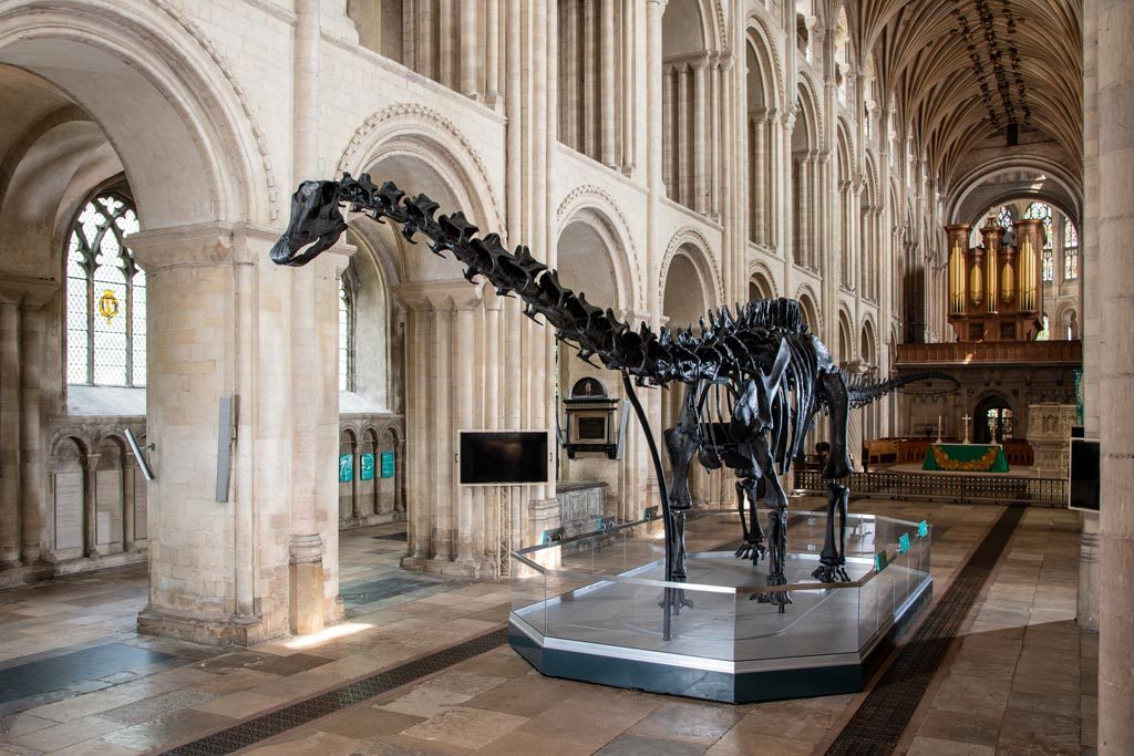 Dippy the Dinosaur, Norwich Cathedral