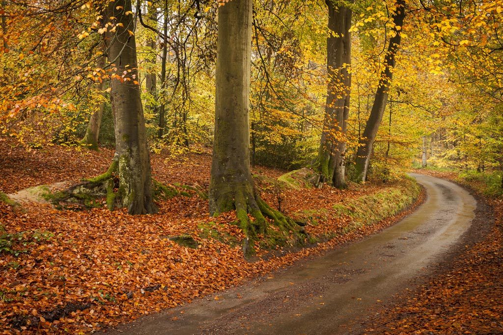 Striking autumn colour in the Great Wood at Felbrigg Hall (credit) National Trust Images Justin Minns